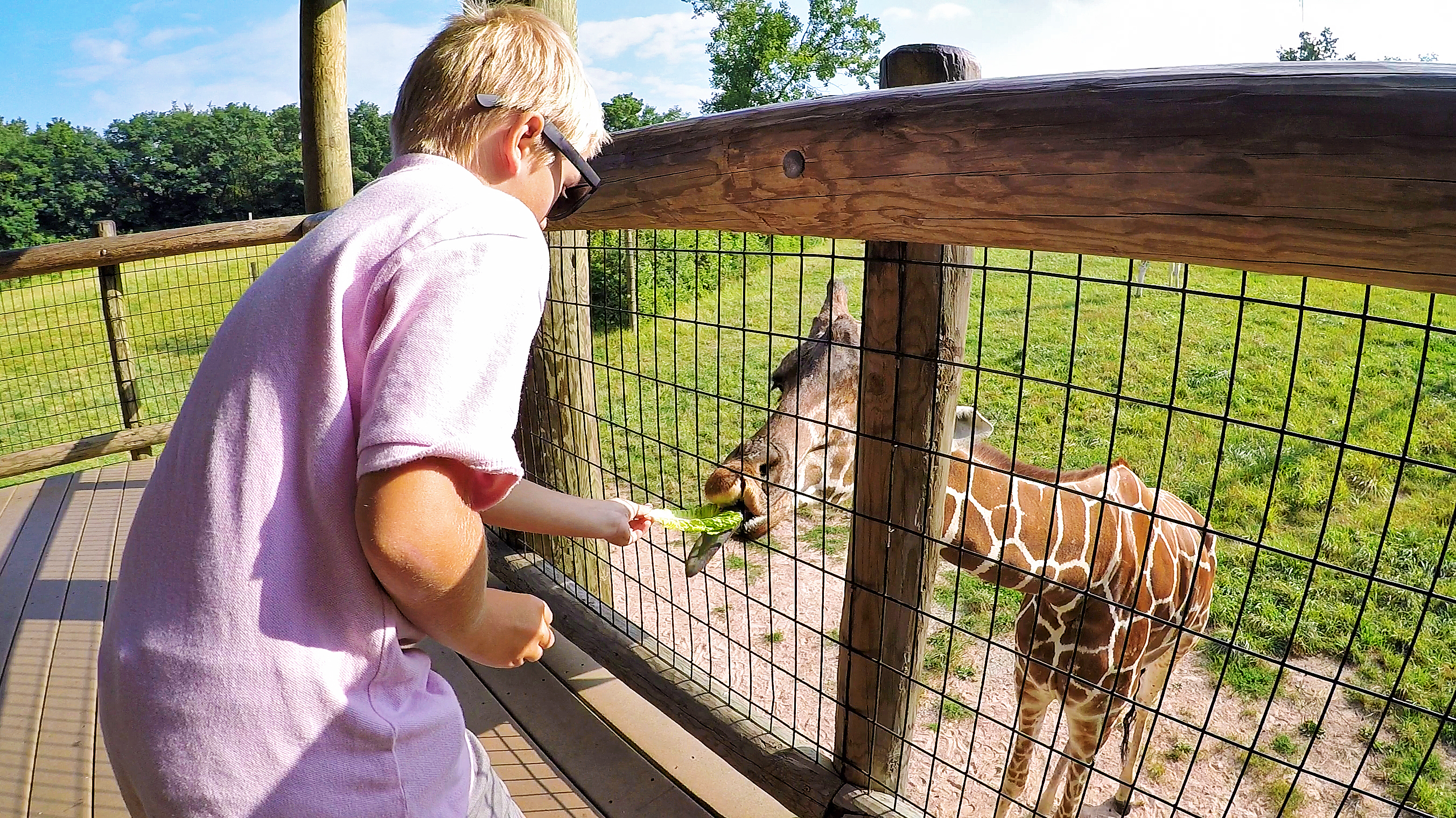 5 Globetrotters guide to Fort Wayne Zoo