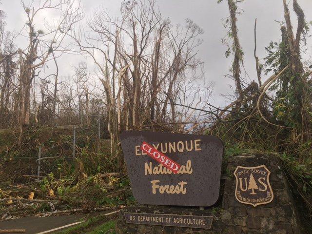 El-Yunque-National-Forest_Maria_